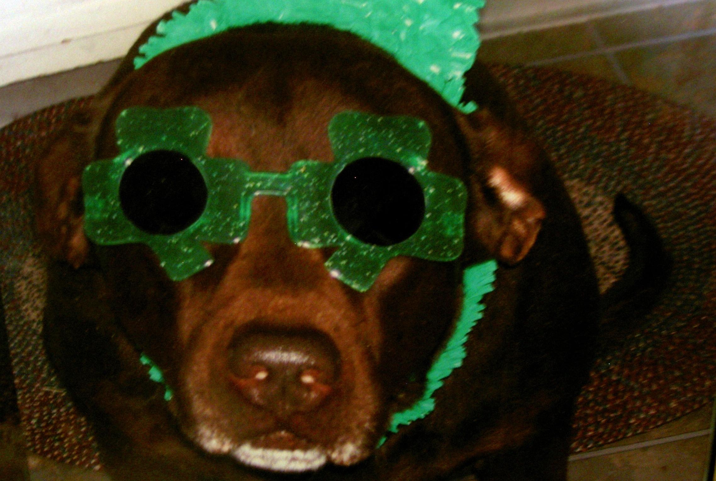 st-patricks-dog