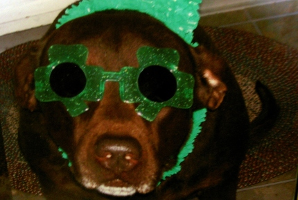 st-patricks-dog