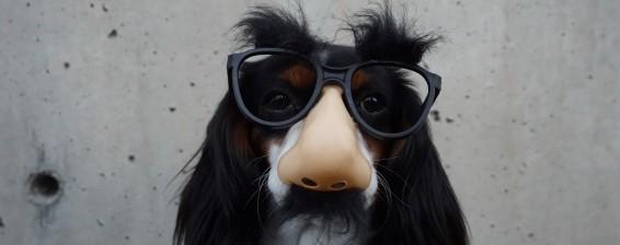 eyebrow-dog